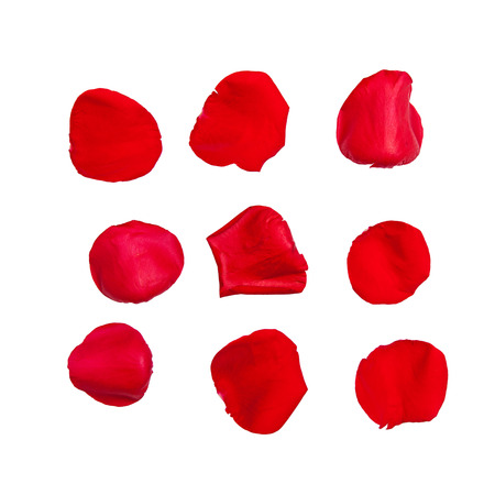 簡単な抽出のためのクリッピングパスと白に隔離された9つの赤いバラの花びら