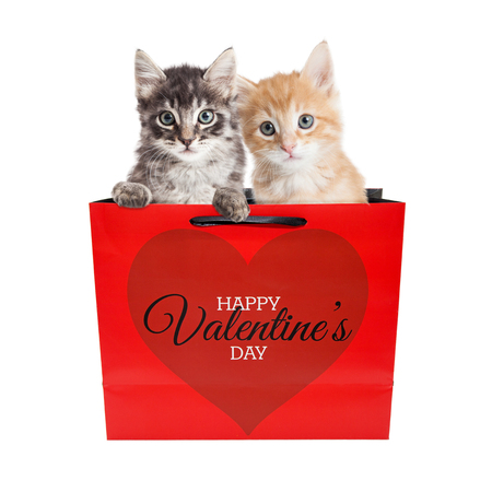 Two cute kittens in a Valentines Day gift bag, isolated on white