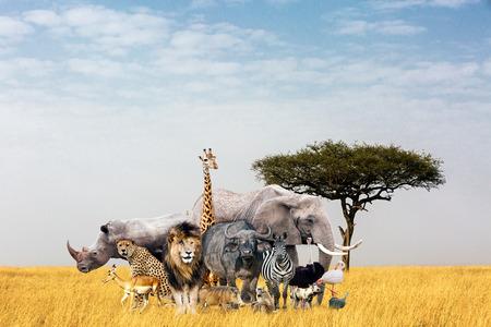 Grote groep Afrikaanse safaridieren samengesteld samen op een open grasveld in Kenia, Afrika