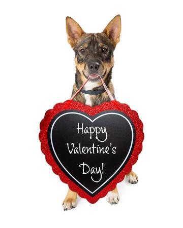 ハート型の黒板にハッピーバレンタインデーのメッセージを運ぶCteシェパード交配犬