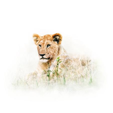 Leuke babyleeuw die in lang gras van Afrika ligt.
