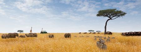 Afrikaanse safari fantasie scène met wilde dieren in hoog gras en toeristen in game drive voertuigen. Sized voor website banner of social media header Stockfoto
