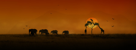 Sitio web o banner de redes sociales con siluetas de una manada de elefantes africanos jirafas y pájaros con una puesta de sol naranja dorada