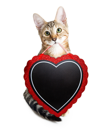 Cute kitten carrying heart-shaped blank chalkboard to enter your Valentines Day message onto with chalk font