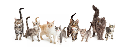 Row of different size and breeds of cats and kittens together in a row, isolated on a white social media or web banner Imagens