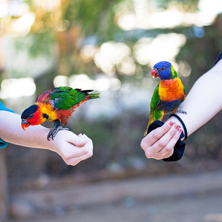Colorful parrots perched on the arms of two children Reklamní fotografie