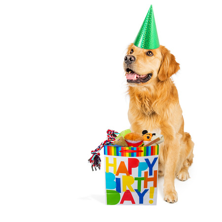 Happy Golden Retriever dog wearing a party hat with a birthday gift bag full of toys and treats
