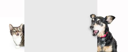Divertente cane e gatto dietro un cartello bianco, guardando con espressioni scioccate e sorprese. Archivio Fotografico - 99224065