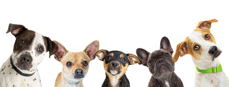 Row of different size and breed dogs over white horizontal social media or web abnner with room for text Stockfoto