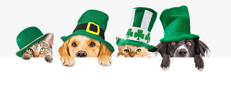 Row of cute dogs and cats wearing green St Patrick's Day hats while peeking over a blank white web banner or social media cover