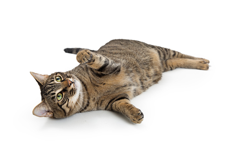 Frisky young tabby cat lying on its side with paw lifted to play Stock Photo