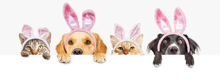 Row of cute dogs and cats looking over a blank white, web banner wearing Easter Bunny ears