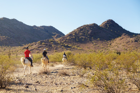 Unidentifiable people riding horses through Mountain View Park in Phoenix, Arizona Фото со стока