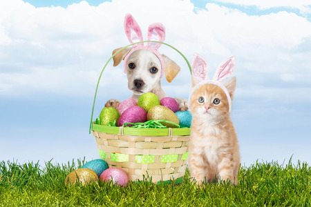 Cute puppy and kitten wearing Easter bunny ears with a basket of colorful eggs Stock Photo