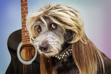 Funny punk rock dog with guitar wearing a mullet hairstyle wig and spiked collar