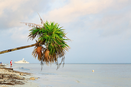 Leaning palm tree hanging over the shore of a beach in Cozumel, Mexico with a fisherman and luxury yacht in the background
