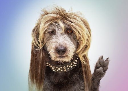 Funny dog dressed as a punk rock star wearing a mullet wig and raising paw with fingers in a peace sign