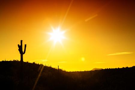 Silhouette des einzelnen Saguaro-Kaktus in der Sonora-Wüste von Arizona mit Kopienraum im goldenen Sonnenaufgang oder im Sonnenuntergang