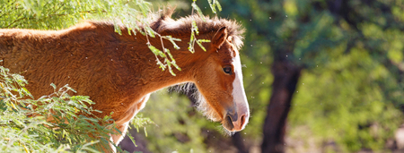 Horizontal banner of young baby foal horse in the sunlight