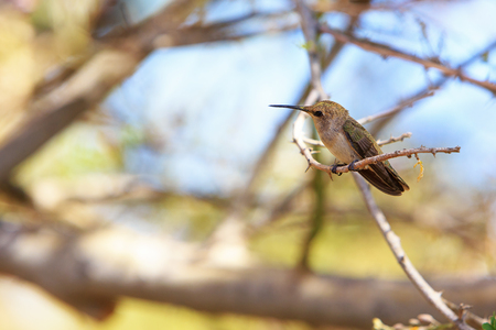 Hummingbird perched on branch of a tree with room for text in blurred nature background