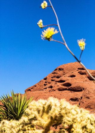 Papago Mountain Park with cactus and wildflowers in the foreground Banco de Imagens