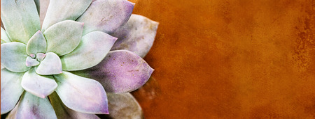 CLoseup of Pachyveria Opalina - Stekken succulent plant with room for text in orange terra cotta background