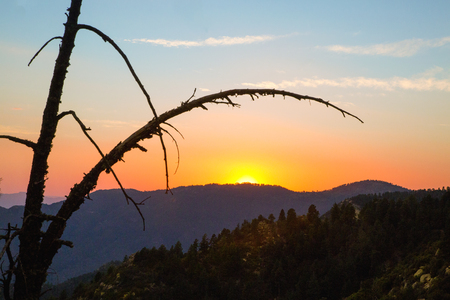 Silhouette of old tree branches in front of a sunset over a mountain range iin Mt. Graham, Arizona Banco de Imagens