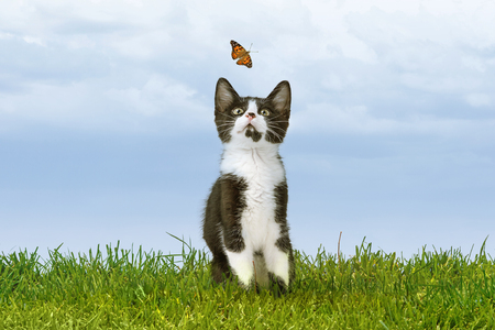 Cute little kitten sitting outdoors on green grass watching a butterfly flying with room for text