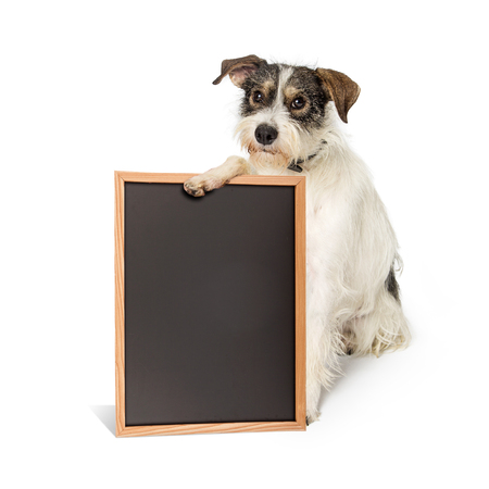 Cute mixed small breed wire-haired terrier dog holding a blank black chalk board with room for text