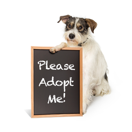 Cute terrier crossbreed dog with sad expression holding a chalkboard sign with Please Adopt Me written in chalk
