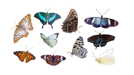 Set of various butterflies and moths isolated on white 写真素材