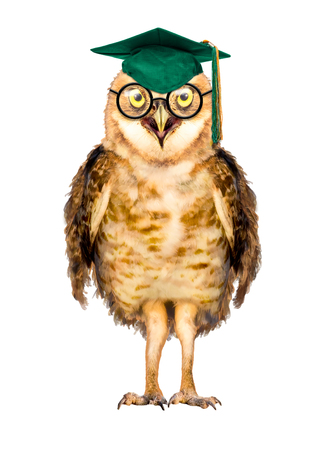 Wise owl character wearing school graduation cap and glasses. Isolated on white.
