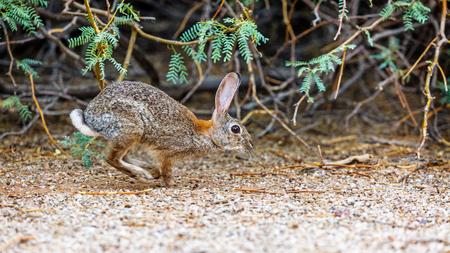 Cute little brown bunny rabbit running through the woods