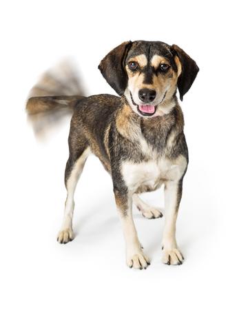 Lustiges Foto des glücklichen Mischlingshundes mit Bewegungsunschärfe auf wedelndem Schwanz und lächelndem Ausdruck