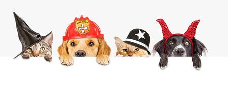 Rangée de chats et de chiens portant des costumes d'Halloween suspendus au-dessus d'une bannière blanche vierge