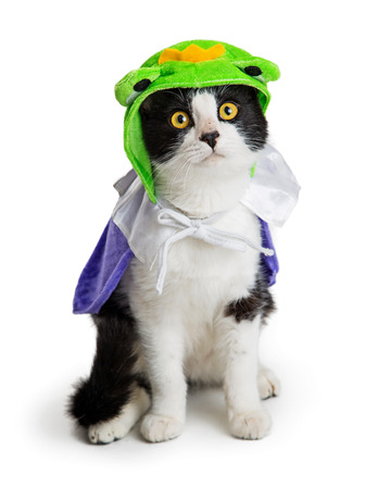 Cute kitten wearing funny frog prince Halloween costume, sitting on white background.