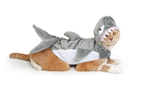 Cute cat wearing funny shark Halloween costume while lying down to side on white background. Imagens