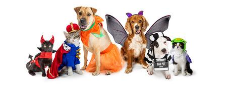 Fila de perros y gatos juntos vistiendo lindos disfraces de Halloween. Banner web o encabezado de redes sociales en blanco. Foto de archivo