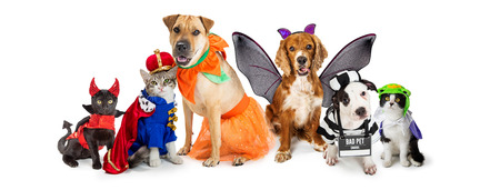 Row of dogs and cats together wearing cute Halloween costumes. Web banner or social media header on white.