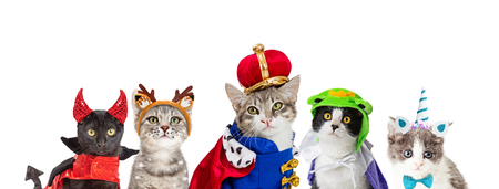 Row of cute cats in Halloween costumes on white background