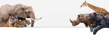 Group of common large zoo animals facing each other hanging over a blank white horizontal web banner or social media cover with room for text.