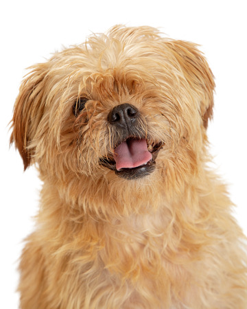 Closeup portrait of a shaggy brown one-eyed dog with open mouth and happy expression