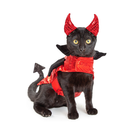 Cute black kitten wearing funny red devil costume with horns and pointed arrow tail.
