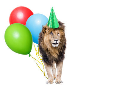 African male Lion wearing birthday party hat holding colorful balloons with room for text in white copy space