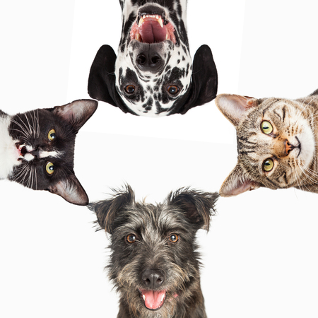 Dogs and cats with happy expressions peeking into a white square