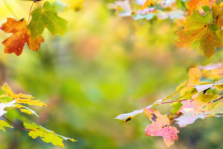 Colorful autumn leaves border with room for text in blurred background 스톡 콘텐츠