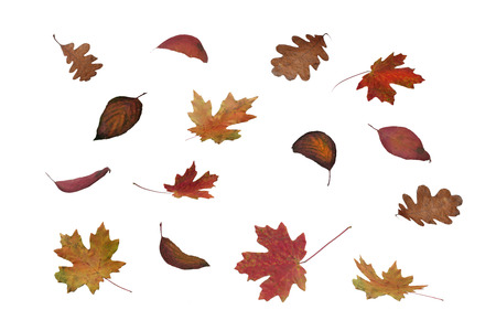 colorful autumn leaves falling isolated on white Standard-Bild - 110733876