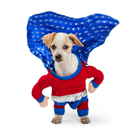 Funny photo of dog wearing superhero Halloween costume with cape flapping in the wind