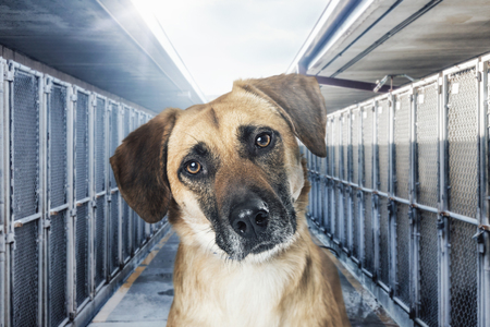 Closeup of sad dog in middle of rows of outdoor kennels at an animal shelter