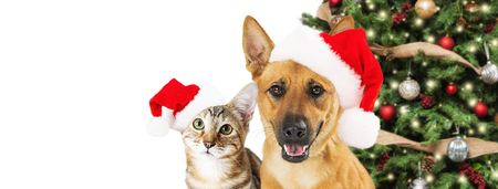 Cute Christmas dog and cat wearing Santa Claus hats with tree.